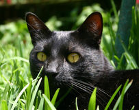 Cat in the grass. Cat black in the grass Stock Photo