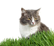 Cat in the grass Royalty Free Stock Photography