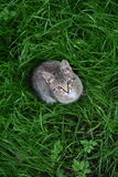 The cat on grass Royalty Free Stock Photos