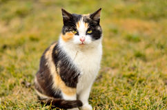 Cat in grass. Beautiful colored cat sitting in grass Royalty Free Stock Images
