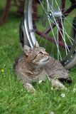 Cat on the grass and bike Stock Photos