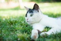 Cat on the grass Stock Photo