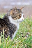 Cat in the grass 1 Stock Photography