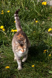 Cat In The Grass. With dandelion Royalty Free Stock Photos