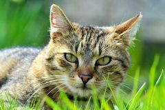 Cat in grass. Cat detail in spring colorful grass Royalty Free Stock Photos
