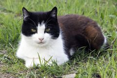 Cat in grass. Domestic cat in garden with grass around Stock Photography
