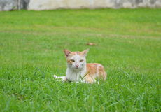 Cat on grass field Stock Images
