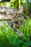 Cat. A cat on grass in the garden Stock Image
