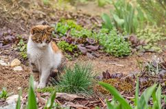 Cat  in the summer garden. Cat on the grass in the garden surrounded by flowers. Cute cat standing outdoor in spring or summer flowers field royalty free stock photography