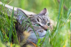 Cat in grass Stock Image