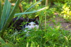 Cat in grass Royalty Free Stock Images