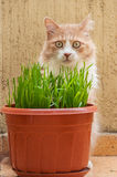 Cat and grass Royalty Free Stock Image