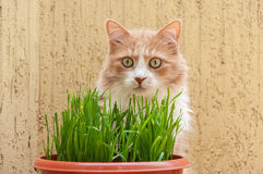 Cat and grass Stock Images