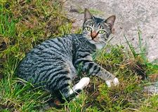Cat with grass. In the ground, cute, animal, pet Stock Photography