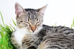 Cat in grass Stock Photos