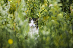 Cat hiding in grass Royalty Free Stock Photos