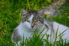 Cat in grass Stock Photo