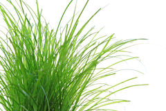 Cat grass Royalty Free Stock Image