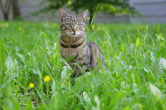 Cat. On the grass looking at you Stock Image