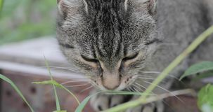 Cat in the grass outdoor stock video