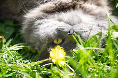 The cat on a grass Stock Image