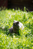 The cat on a grass Royalty Free Stock Photos