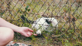 Cat in the Grass Playing with a Person stock footage