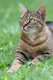Cat on the grass portrait stock photo