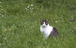 Cat in the grass - RAW format Royalty Free Stock Photo