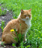 Cat on grass Royalty Free Stock Photos