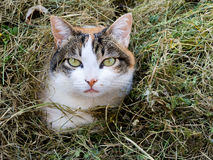 Cat in the grass - shy maybe. Domestic pet. royalty free stock image