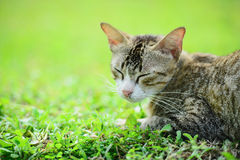 Cat on the grass Stock Image
