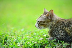 Cat on the grass Stock Photos