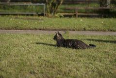 Cat on the grass Stock Photos