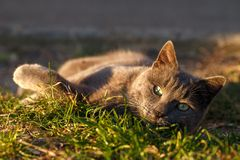 Cat on grass in sunlight Stock Photo