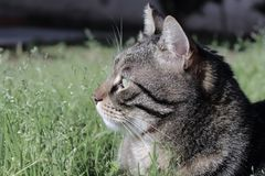 Cat in the grass. Tiger striped cat relax in the peace and tranquility stock photo