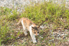 Cat in grassland Stock Photography