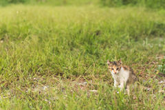Cat in grassland Royalty Free Stock Image