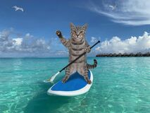 Free Cat Gray On Stand Up Paddle Board Stock Photos - 208508283