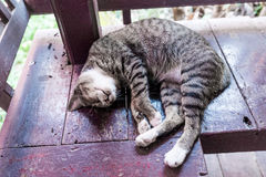 Cat. A gray cat sleeping on wooden stock images