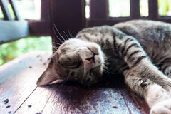 Cat. A gray cat sleeping on wooden stock photos