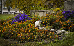 cat with gray spots is sitting on a bed of colorful flowers Royalty Free Stock Photography