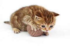 Cat and gray wool ball Stock Images