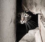 Cat. A great picture of a cat, ideal for backgrounds and postcards...etc Stock Photo