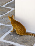 Cat in Greece. A ginger cat looks around a corner, Ios island, Cyclades, Greece Stock Photography