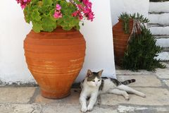 Cat of Greece Stock Photos