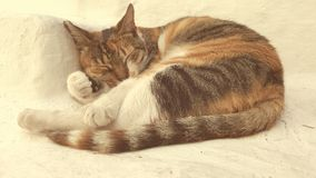 Cat sleeping outdoors. Calico cat sleeping outdoors on Greek Island of Cyclades Royalty Free Stock Photography