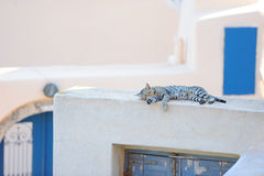 Cat on a Greek island Santorini Stock Images