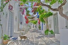 Cat in Greek Island Street Royalty Free Stock Photography