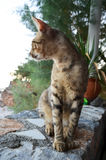 Cat in greek taverna Stock Images